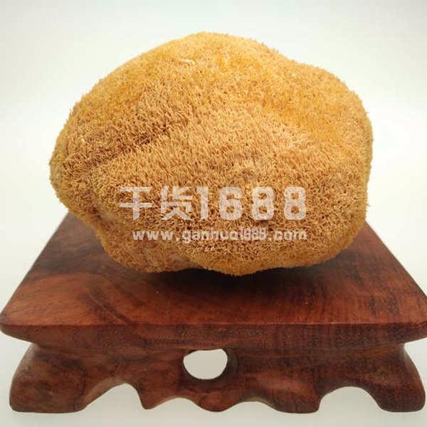 大野山特级猴头菇